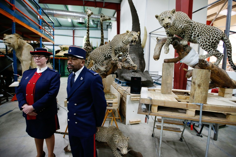 Customs officers stand in front of stuffed leopards as part of a fight against the trafficking of protected species at the Museum of Natural History in Paris
