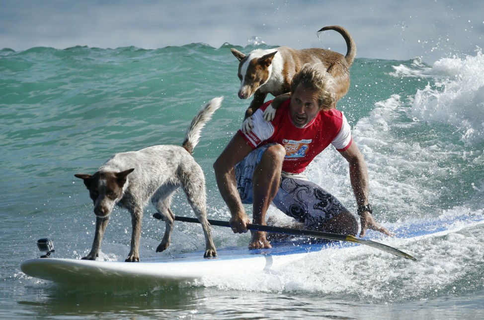 Australian dog trainer and former surfing champion Chris de Aboitiz rides a wave with his dogs Millie and Rama off Sydney's Palm Beach