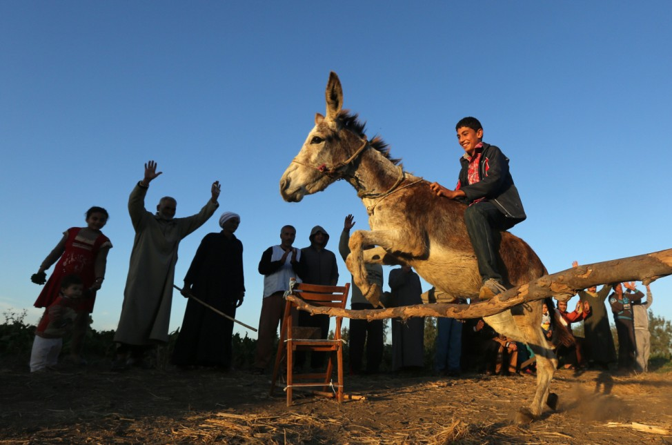 Fourteen-year-old Ahmed Ayman, who lives in a small village in the North of Egypt's Nile Delta, trains his donkey to jump obstacles in Mansoura