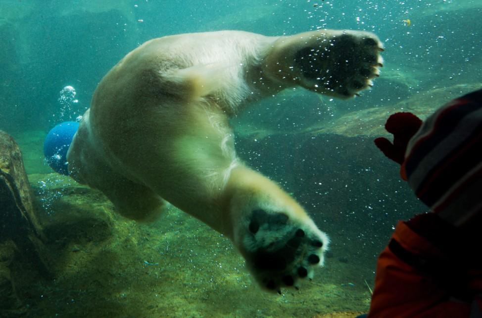 Polar bear in Vienna