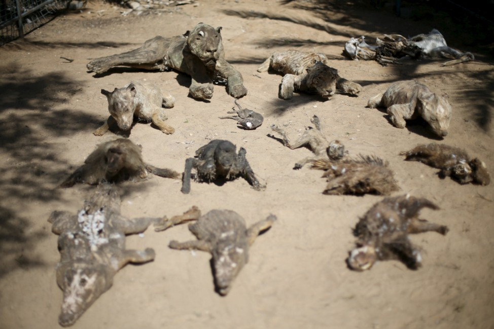Stuffed animals, that died during the 2014 war, are on display at a zoo in Khan Younis in the southern Gaza Strip