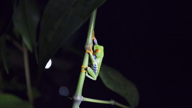 Costa Rica (für die Reise - Autorin: Anja Martin)