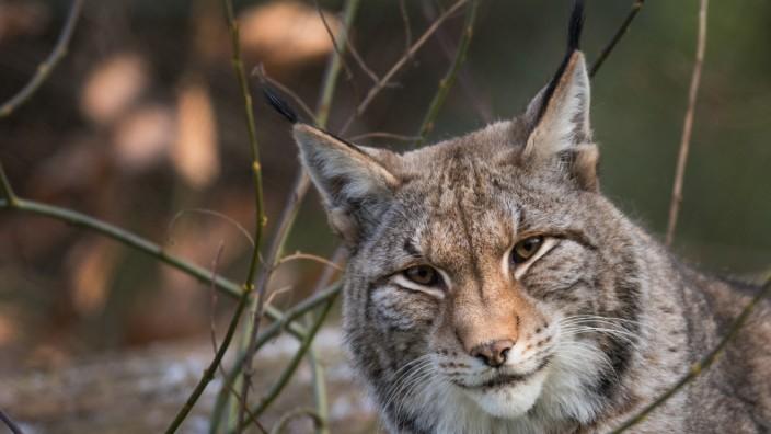 Opel-Zoo zieht Bilanz