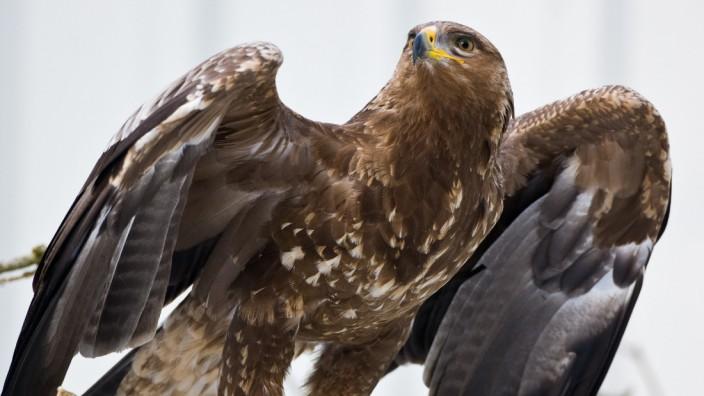 Vogelschutzstation Woblitz