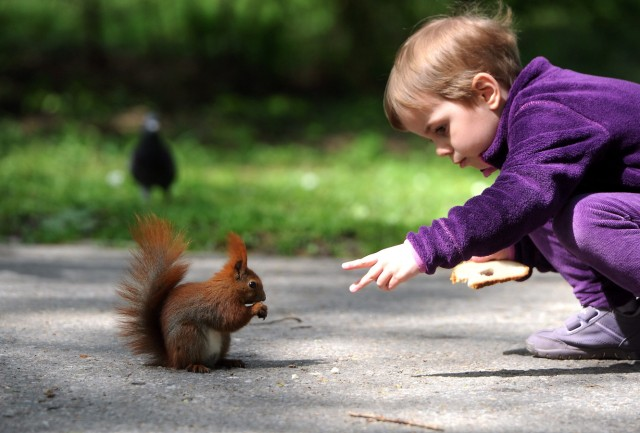 A child looks at a squirrel at the Royal Lazienki Park