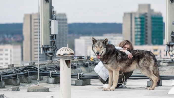 """""""Wild"""" von Nicolette Krebitz im Kino: Von vorne nach hinten: Wolf, Mädchen (Lilith Stangenberg) und Halle-Neustadt. Zusammen ergibt das den animalischen Liebesfilm """"Wild""""."""
