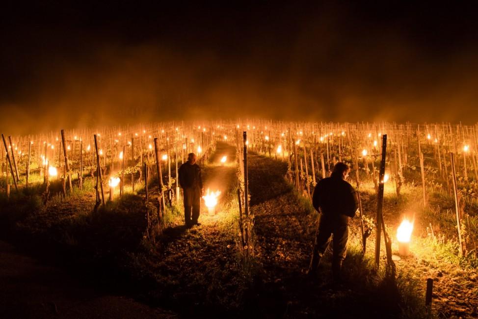 Anti-frost candles burn in a vineyard in Flaesch
