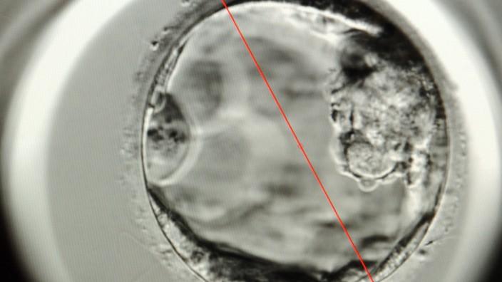 Menschlicher Embryo