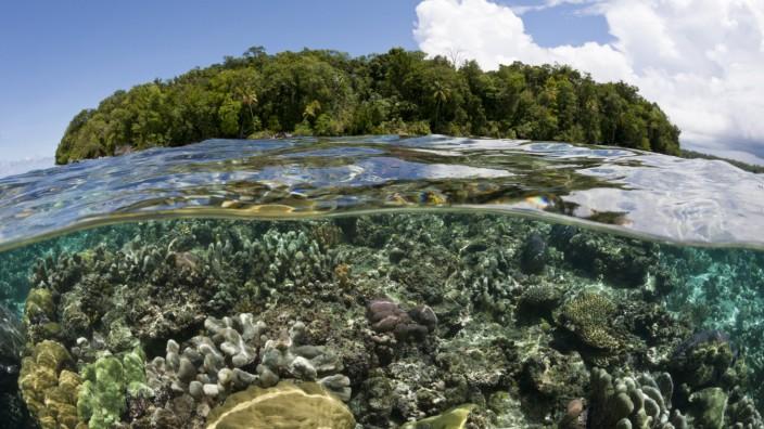 Riffdach mit Korallen, Marovo Lagune, Salomonen Corals on Reef Top, Marovo Lagoon, Solomon Islands R