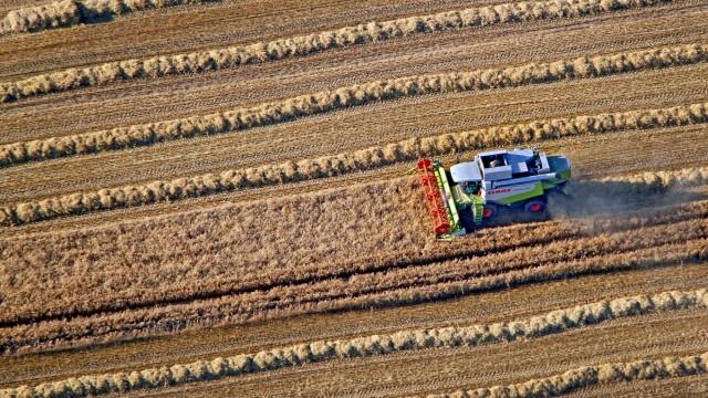 Mähdrescher auf Getreidefeld