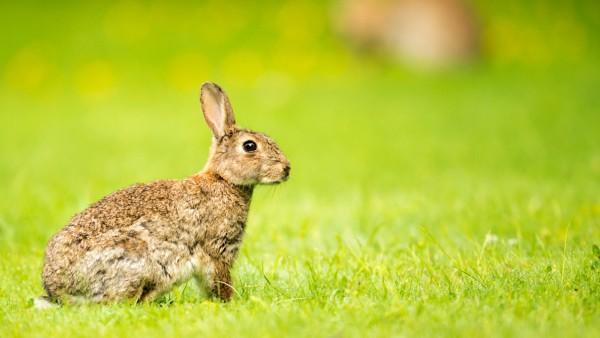 Kaninchen im Tiergarten