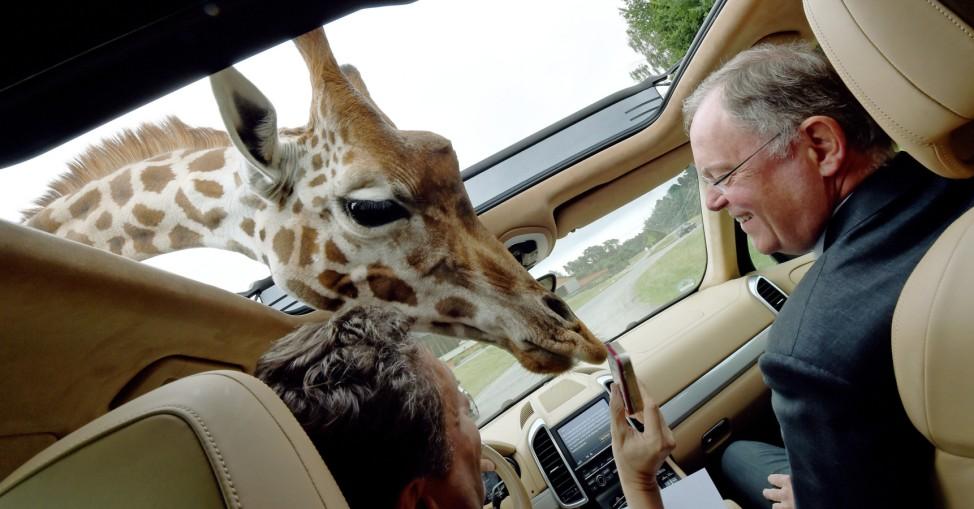 Weil im Serengeti-Park