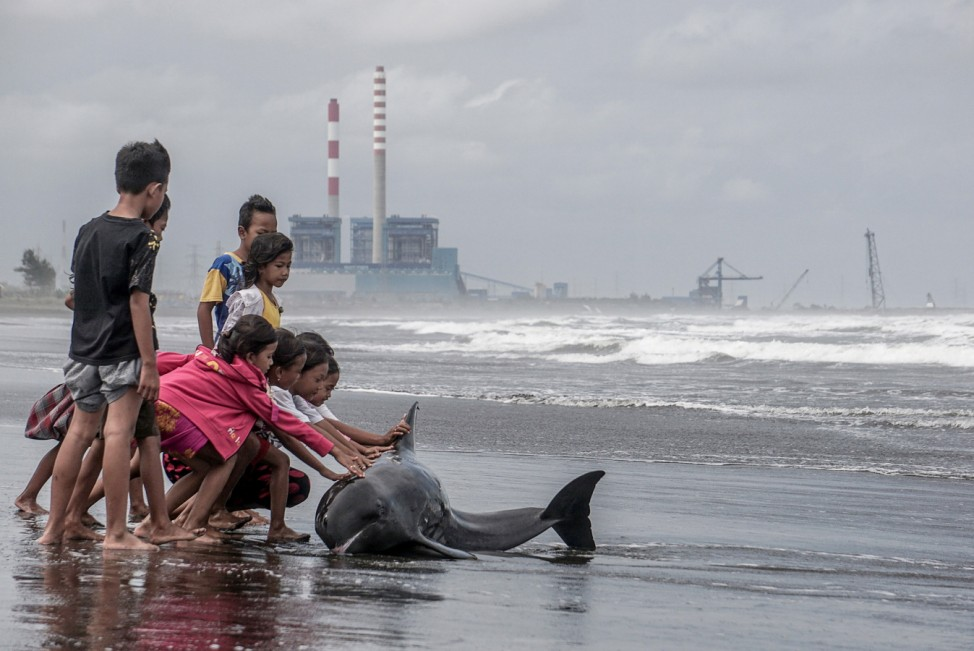 Children try to push an injured and weak dolphin back into the water after it washed ashore during bad weather and high tide on a beach in Cilacap, Central Java, Indonesia