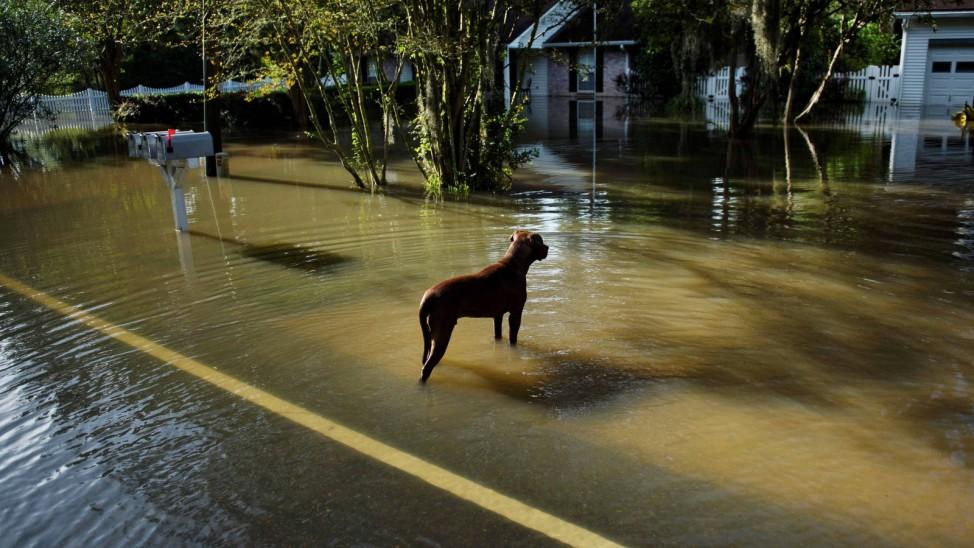 Jahrhundertflut in Louisiana 2016