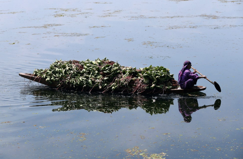 A woman in a canoe collects weeds on Dal lake in Srinagar as the city remains under curfew following weeks of violence in Kashmir