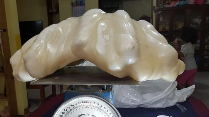 A pearl of 34 kilogram awaiting certification as the biggest in t