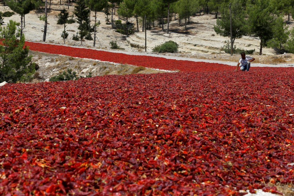 A farmer checks hot peppers laid out on a road to dry under the sun before selling them to factories producing pepper products in Kilis
