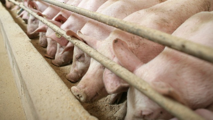 Agrarminister stellt Tierschutzbericht vor