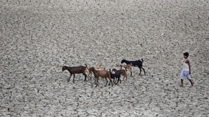 Wassermangel in Indien: Das Wasser auf dem Subkontinent wird knapp: Ein Junge treibt seine Herde über den Boden einer ausgetrockneten Viehtränke bei Allahabad in Nordindien.