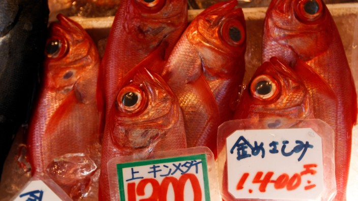 Fish are seen on display at the Tsukiji fish market in central To