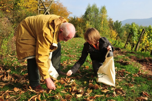 Herbst in Deutschland: Keschdeweg