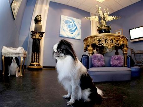 Hundehotel Chateau Poochie