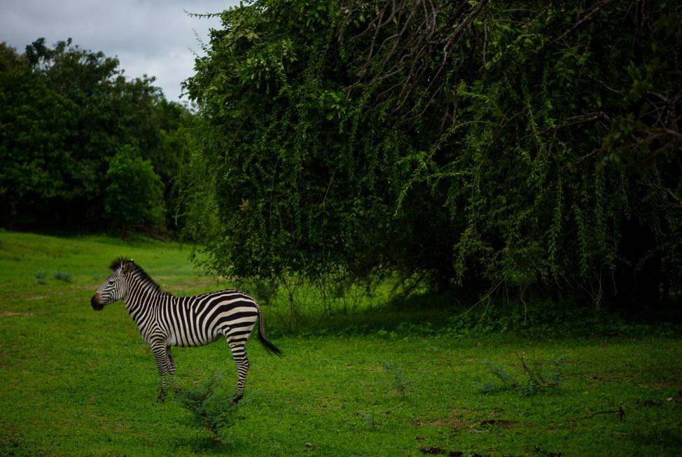 Afrika Wildlife Natur Reisefotograf Kempf-Seifried Safari