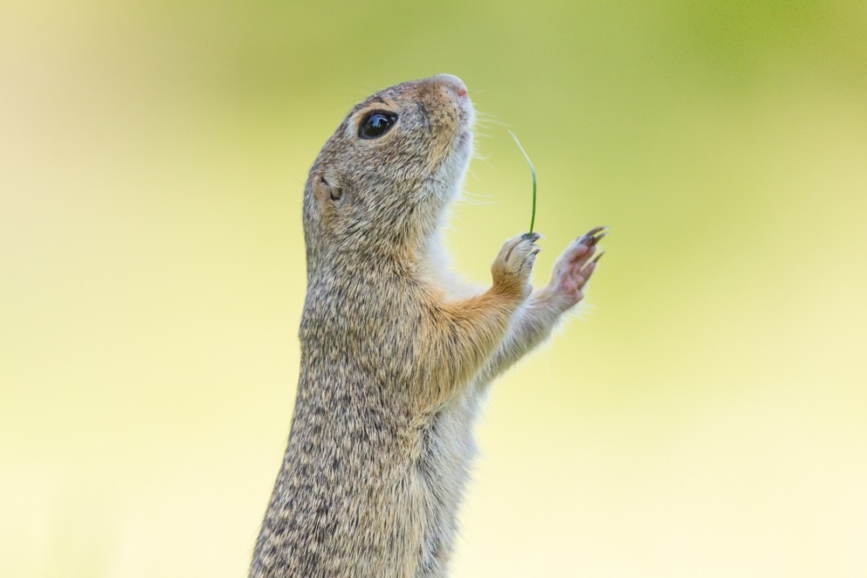 Final Forty: The shortlist for comedy wildlife awards 2016 announced