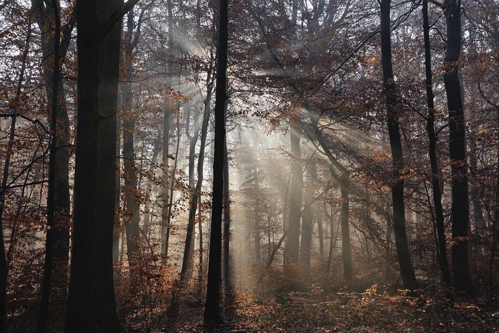 Nationalpark Hainich; Nationalpark Hainich
