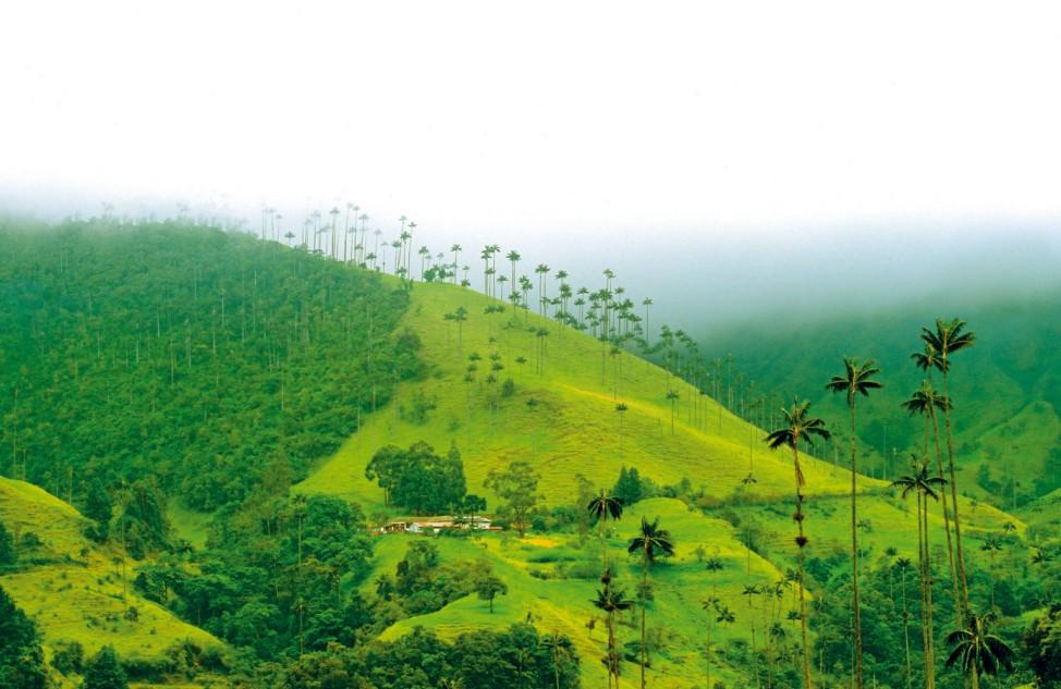 Der schwarze Schatz Kolumbiens - Im Goldenen Dreieck des Kaffees
