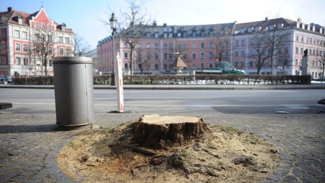 Baumschutz-Initiative: Am Gärtnerplatz musste ein alter Baum weichen, weil er morsch und gefährlich wurde.