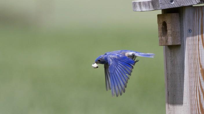 Fäkalsack bei Vögeln