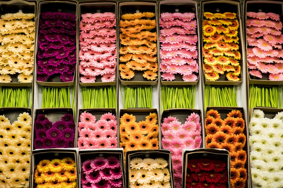 Floristik-Branche unter Druck