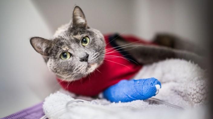 Rechtsstreit um verletzte Katze in Ebern im Landkreis Haßberge (Symbolfoto)