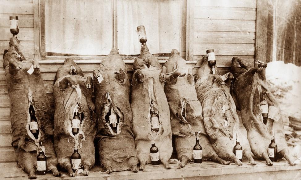 Alkoholschmuggel in Schweinekadavern