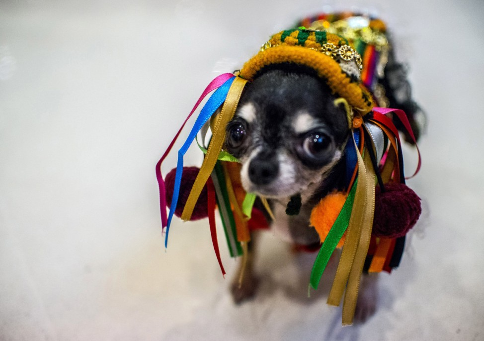 Hunde-Kostümparade in Sao Paulo