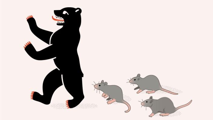 Schädlingsbekämpfung in Berlin: Wie viele Ratten gibt es in Berlin? Manchmal ist von bis zu 14 Millionen die Rede. Sicher ist, dass es über zwei Millionen sind.