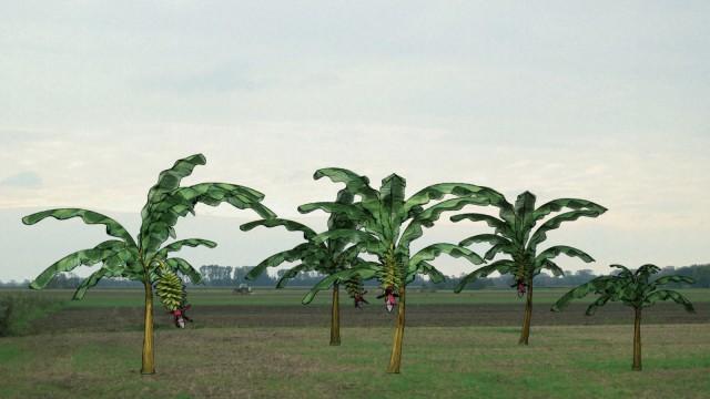 Kinostart - 'Von Bananenbäumen träumen'