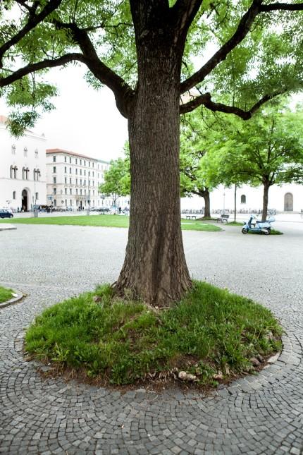Ruth Gehling, Baumschutzbeauftragte des Bezirksausschusses. Das Leitthema: Wie grün kann die ohnehin schon zubetonierte Maxvorstadt bleiben?