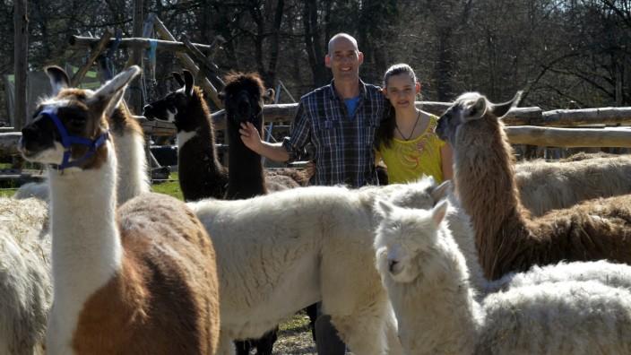 Ferien daheim: Lamas in Aying: Für Olaf Fries und seine Tochter Sara gehören die Mangfall-Lamas quasi zur Familie. Sie gehen mit ihnen sogar in die Alpen.