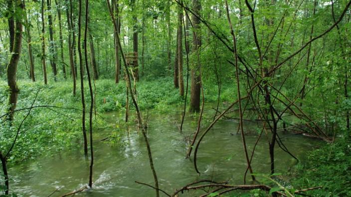 Naturschutz: Der bayerische Dschungel: Die Donau-Auen mit den sumpfig-nassen Gebieten und einer vielfältigen Flora und Fauna zeigen, wo Natur wieder Natur sein darf.