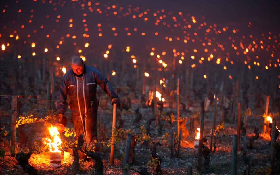 Workers and wine growers light heaters early in the morning to protect vineyards from frost damages outside Chablis