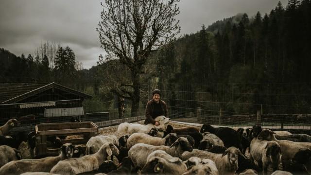 Wölfe in Bayern: Drei große Hunde bewachen die Schafe von Renate Aschauer.