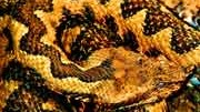Der erste Urlaub allein: Die gerettete Schlangenhaut, pixelio