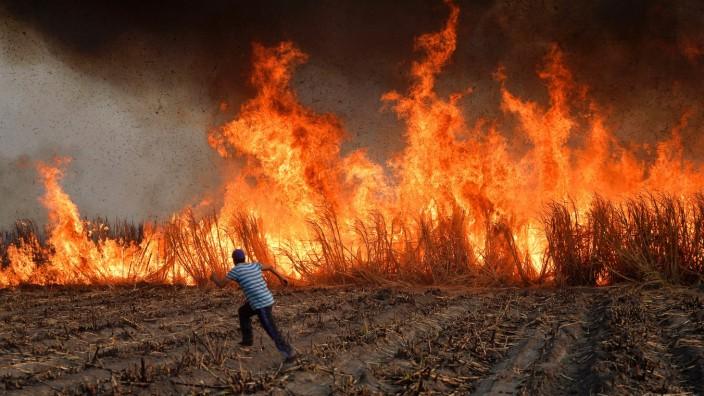 Abkommen zwischen EU und Mexiko: Arbeiter in Atencingo im Süden Mexikos legen in einem Zuckerrohrfeld absichtlich Feuer, um die Blätter der Pflanzen vor der Ernte abzubrennen.