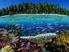 Tropical coral reef Fiji South Pacific Ocean Tropical coral reef Fiji South Pacific Ocean PUBLIC