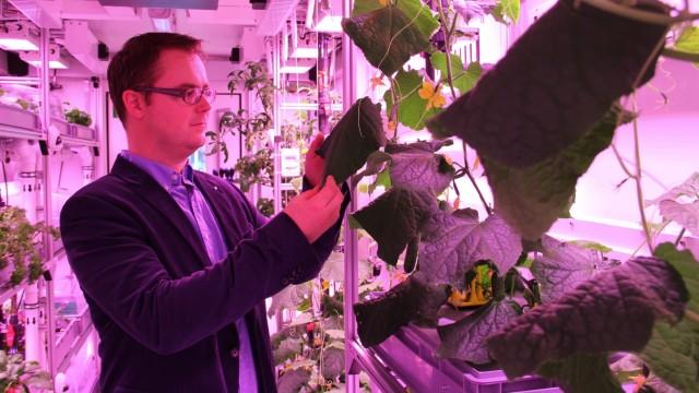 Biologie: Im Eden-Gewächshaus gedeiht alles Mögliche: Tomaten, Rucola, Erdbeeren. Aber Paul Zabel, der bald in der Antarktis gärtnern soll, mag die Gurken am liebsten. Sie wachsen hier rasant, in violettem Licht und ohne Erde. Das könnte auch auf dem Mars funktionieren.