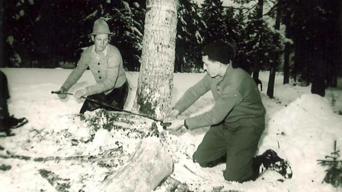 Umwelt: Früher war das Baumfällen extrem anstrengende und gefährliche Handarbeit. Und eigentlich ist es das auch heute noch.