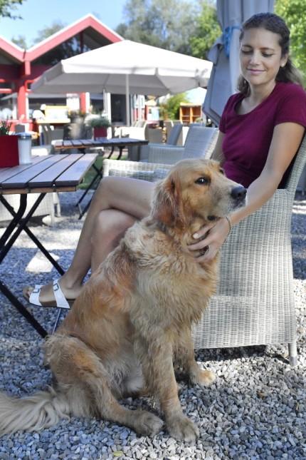 Eching Ammersee, Hunde im Wasser