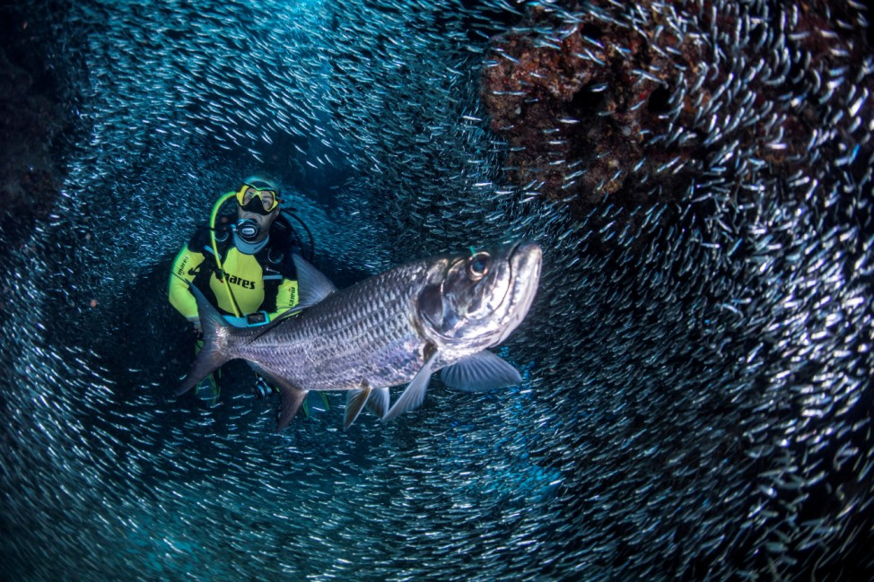 A handout photo of a scuba diver surrounded by schools of Silversides in the Devil's Grotto outside George Town, Cayman Islands